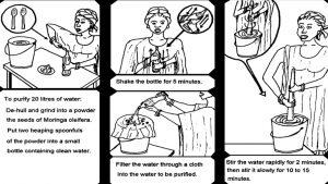 schéma purification eau avec graines moringa