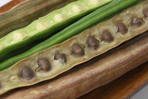 Les graines de Moringa pour purifier l'eau