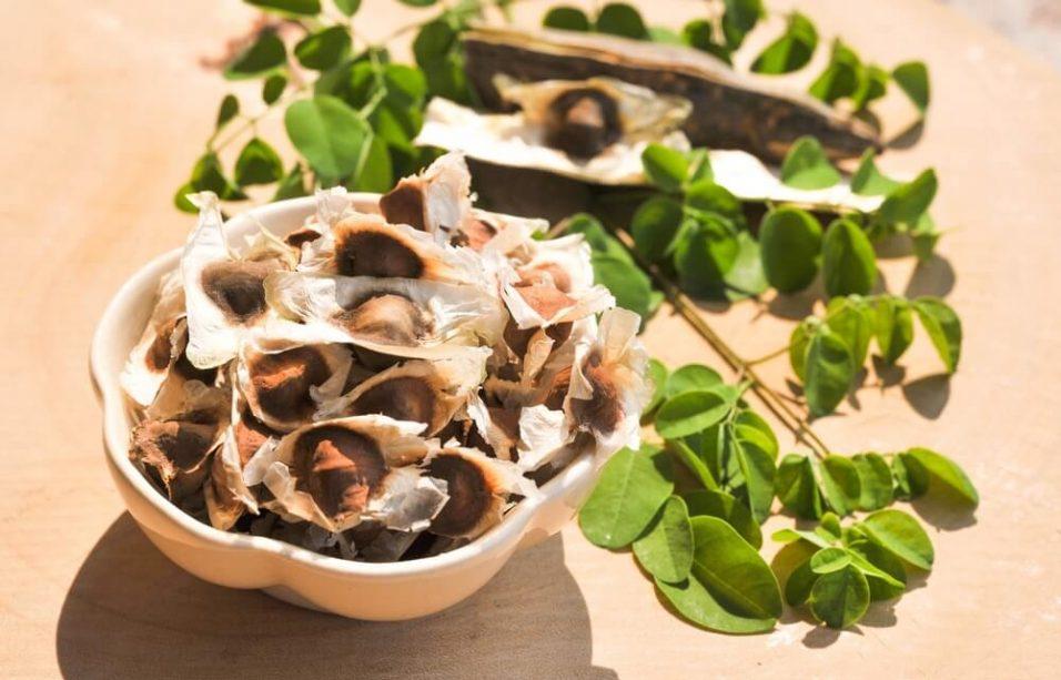 feuilles et graines de Moringa Oleifera